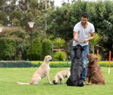Happy man training dogs at the park and giving them treats